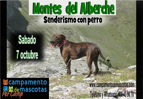 Senderismo con perro por los montes del Alberche 7 de octubre