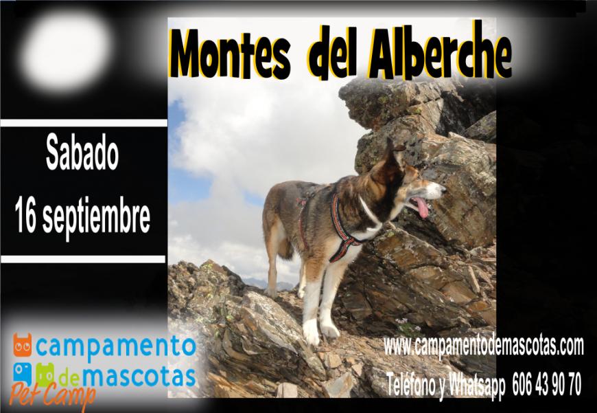 Senderismo con perro por los montes del Alberche 16 de septiembre