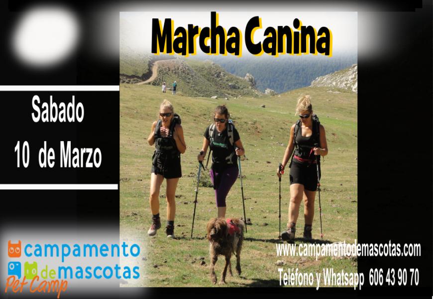 Marcha con perro por el río Guadarrama el 10 de marzo