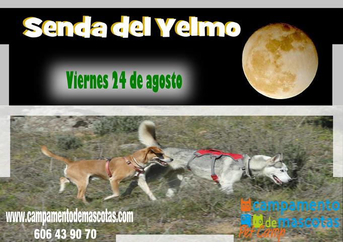 """Ruta Nocturna con perro 24 de agosto: """"Senda del Yelmo"""""""