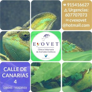 Exovet Vetersalud