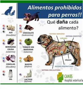 Alimentos prohibidos perros